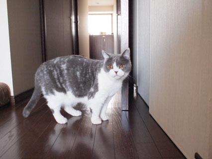 扉を開けーい!