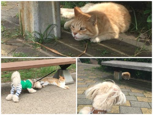ネコちゃんいっぱい