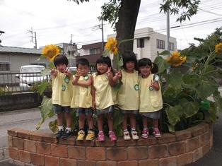 150723 大きく咲いたひまわり (2)