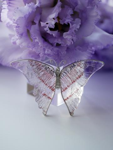 蝶々完成 (1)