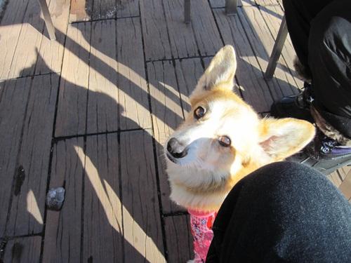 リュラお散歩2014.12.29~31 061