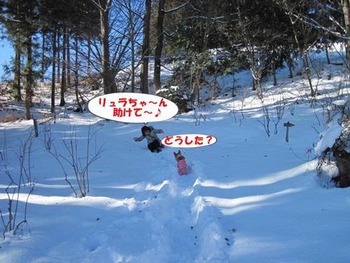 リュラお散歩2014.12.29~31 046