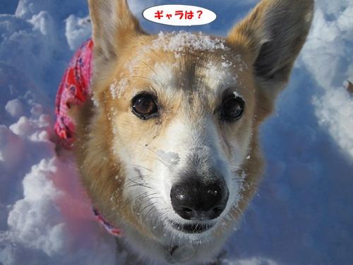 リュラお散歩2014.12.29~31 045