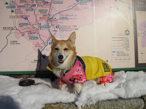 リュラお散歩2014.12.29~31 011