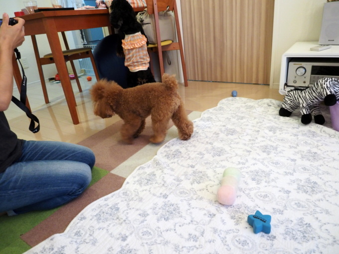 blog_P7184060.jpg