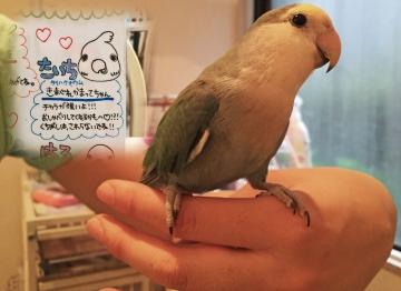20150704-ことりカフェ 表参道 (31)-加工2