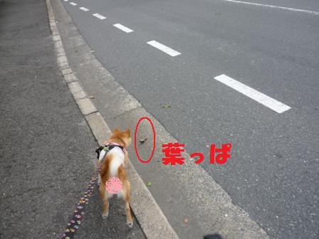 blog9579.jpg