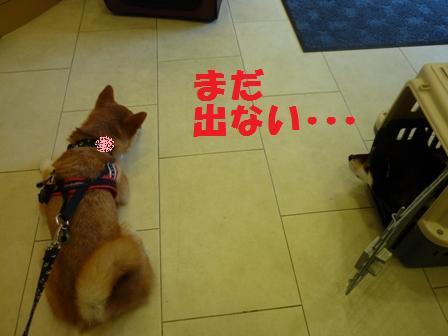 blog9618.jpg