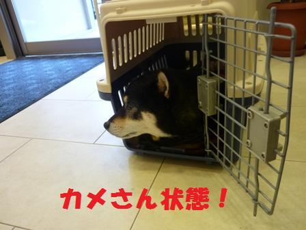 blog9619.jpg