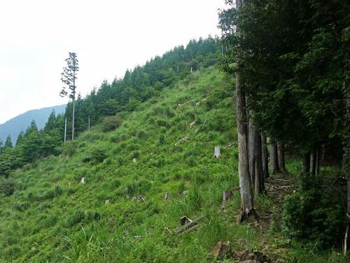 hirabayashi11-159.jpg