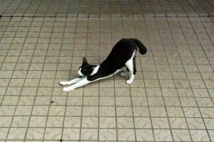 Cat Stretching