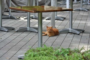 Cat at a restaurant