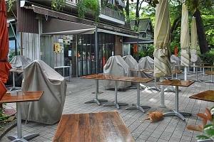 Cat at a restaurant