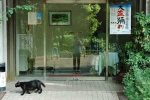 Cat and Closed Restaurant