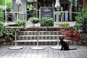Cat at the Closed Restaurant