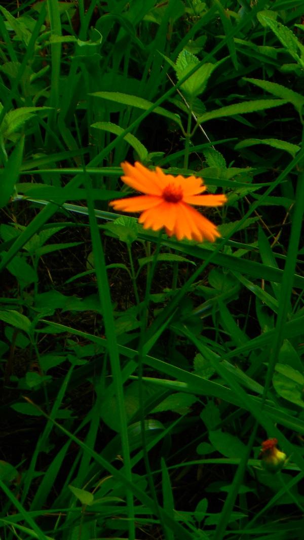 DSCN3129-20150709.jpg