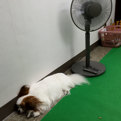 暑いときの定位置
