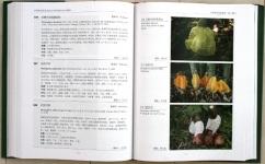 中国熱帯真菌2