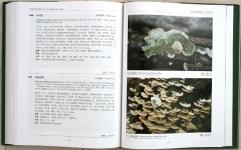 中国熱帯真菌3