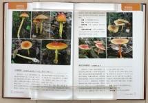 Atlas_Chinese_Spes_Amanitaceae22.jpg