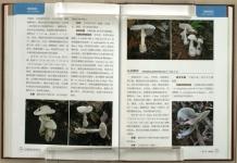 Atlas_Chinese_Spes_Amanitaceae23.jpg