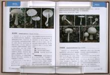 Atlas_Chinese_Spes_Amanitaceae24.jpg