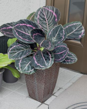 plant2015617-1.jpg