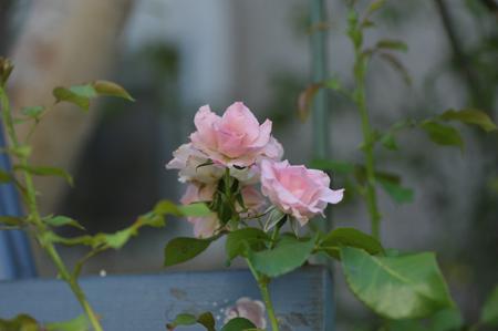 rosen2015710-1.jpg
