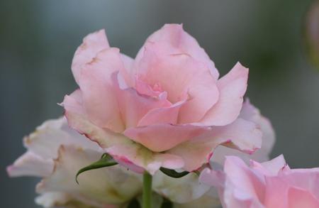 rosen2015710-1a.jpg