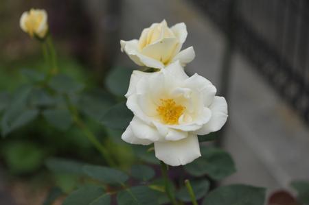 white2015623-1.jpg