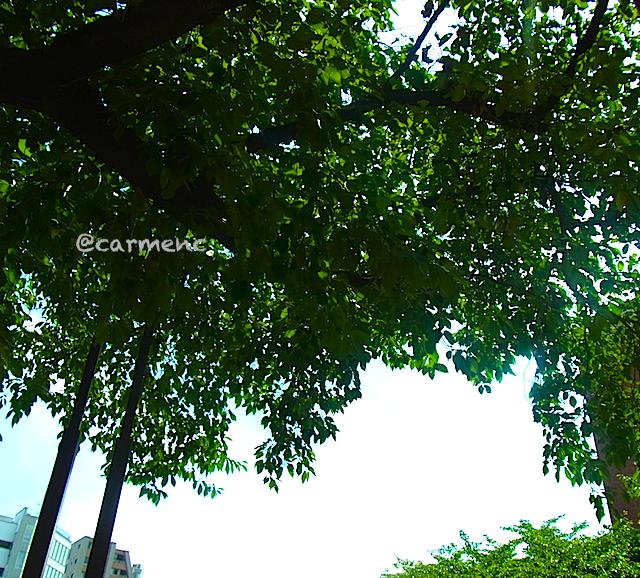 バス停から見上げる空に葉っぱ
