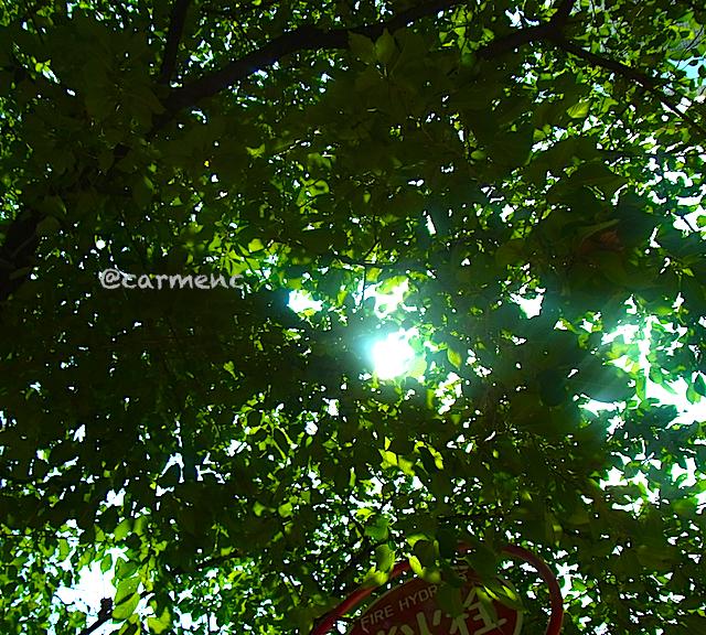 消火栓と葉の間の太陽