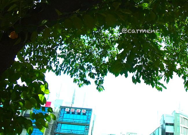 ロータリーの夏空に桜