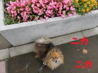 001_20150627212102a5e.jpg