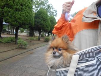 エアー散歩 008