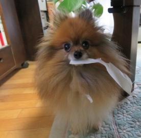 領収書持ち去り犬 3