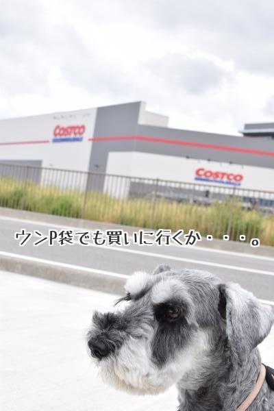 DSC_0308_150606_con_text.jpg