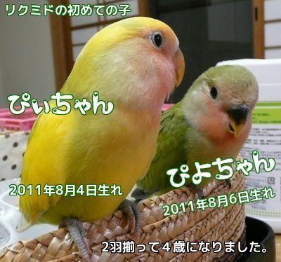 ぴぃぴよ誕生日