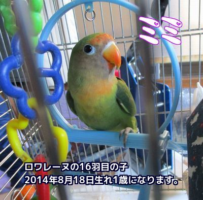 ミミ8月18日1歳