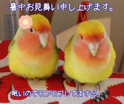 リクお帰り1-1