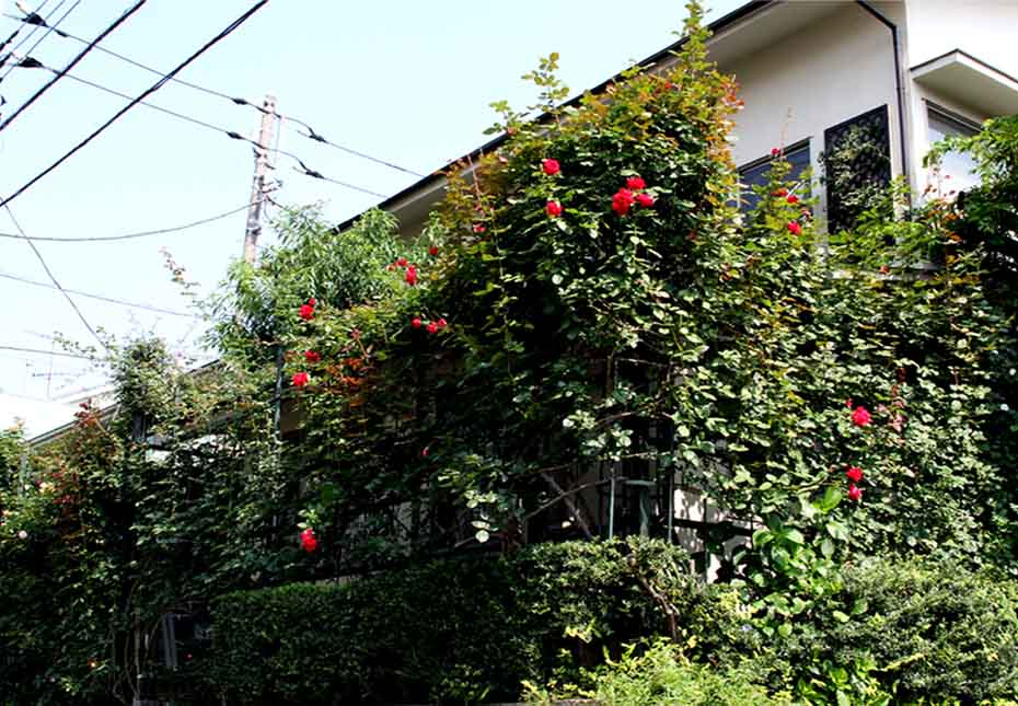 7月11日のバラ模様(2)