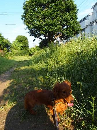 こっちは、草ボーボー