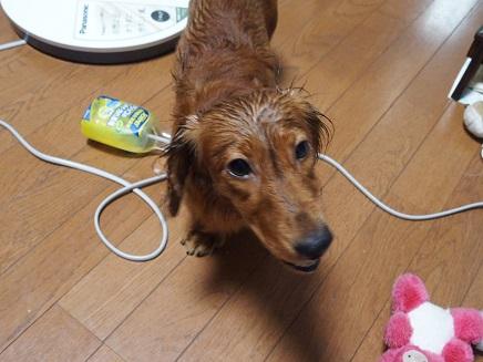 シャワー掛けられた