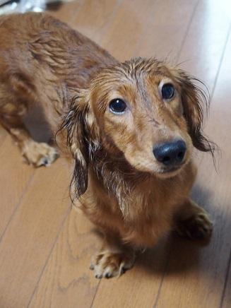 ママ、なんか濡れてない?