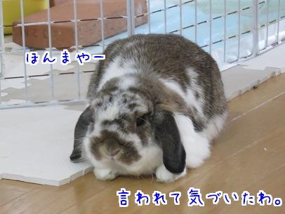 IMG_0426_20150628191440eb1.jpg