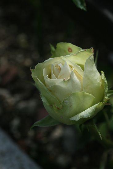 150703-6.jpg