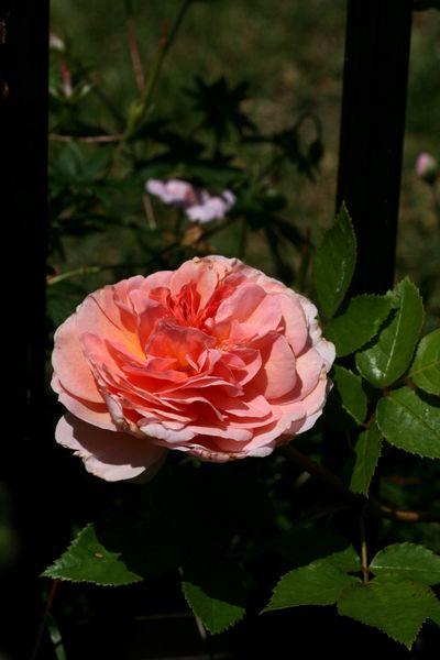 150716-アブラハム ダービー1