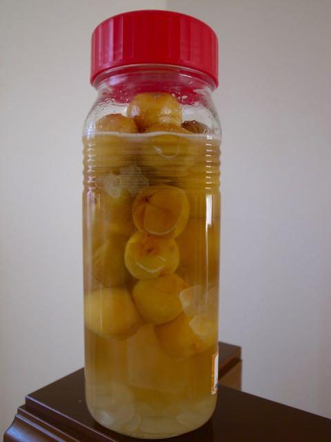 梅シロップ - 1