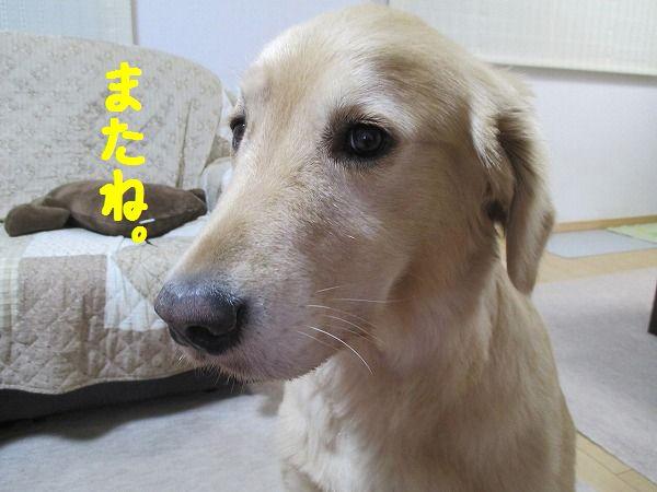2015-07-21-ハチ-003