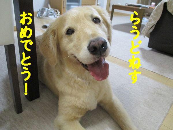 2015-07-21-ハチ-007